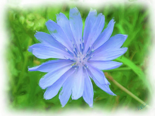 Painting - Blue Chicory - Dwp091502004 by Dean Wittle