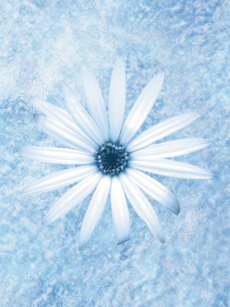 Daisy Digital Art - Blue Daisy by Don Bishop