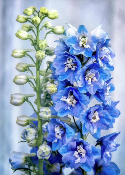 Photograph - Blue Delphinium by Steven Sparks