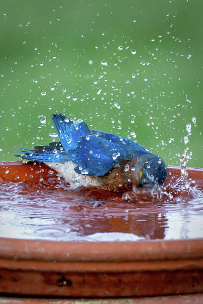 Photograph - Blue Dip by David Heilman