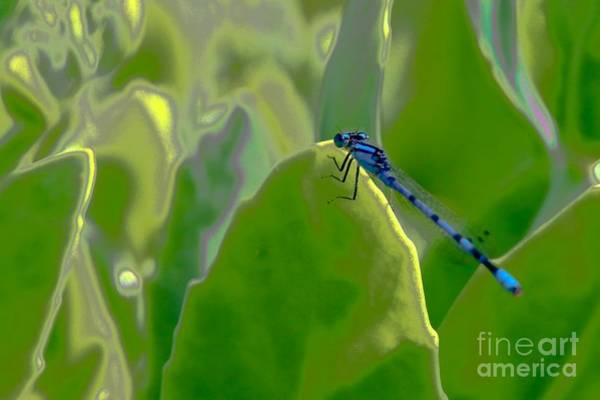 Digital Art - Blue Dragonfly by Susan Rydberg