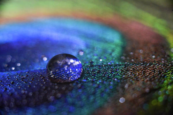 Photograph - Blue Drop by Michelle Wermuth