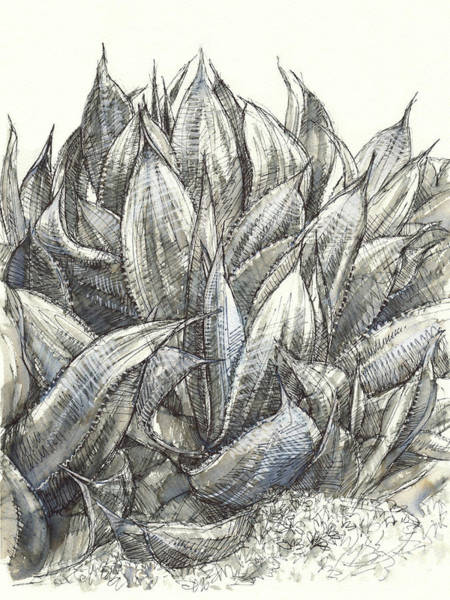 Painting - Blue Flame Agave by Judith Kunzle
