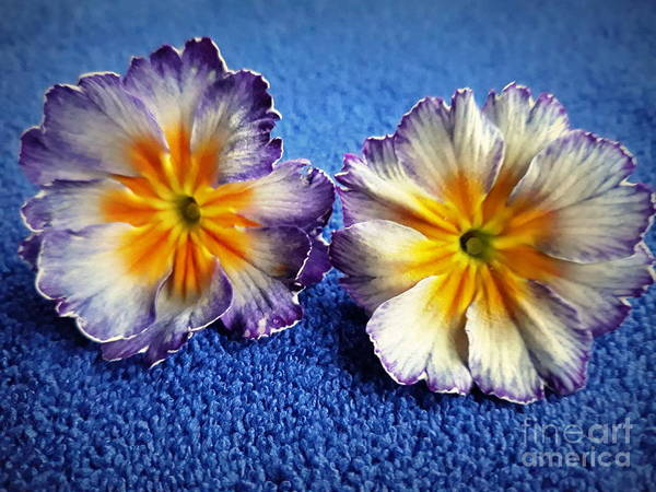 Photograph - Blue Flower by Joyce Woodhouse