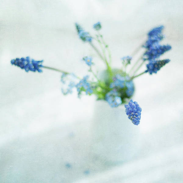 Forget Me Not Photograph - Blue Flowers In White Jug by Jill Ferry