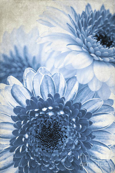 Mixed Media - Blue Gerbera by Angela Doelling AD DESIGN Photo and PhotoArt
