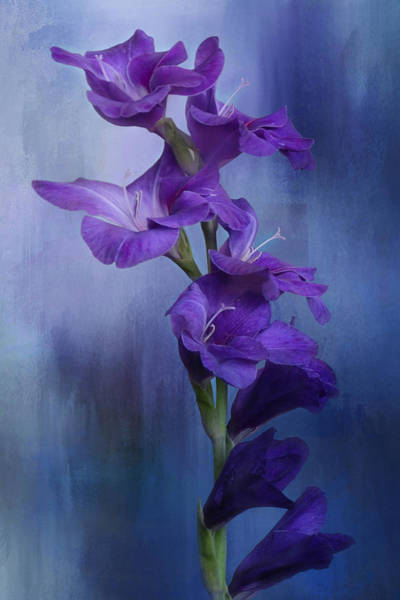 Spring Mountains Mixed Media - Blue Gladiolus 2 by Isabela and Skender Cocoli