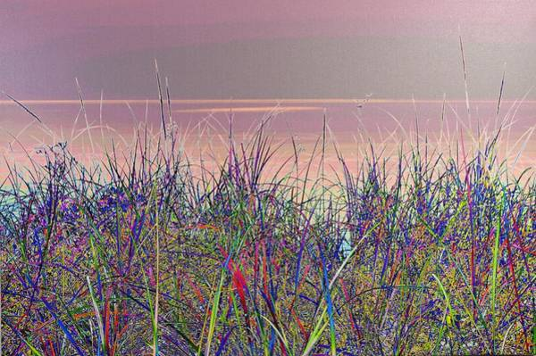 Photograph - blue Grass by Tom Kelly