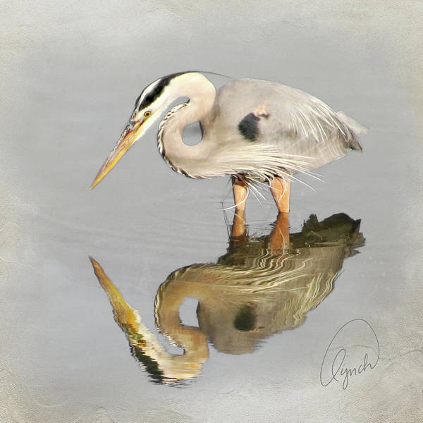 Photograph - Blue Heron 1 by Karen Lynch
