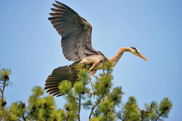 Photograph - Blue Heron 2 by Leland D Howard