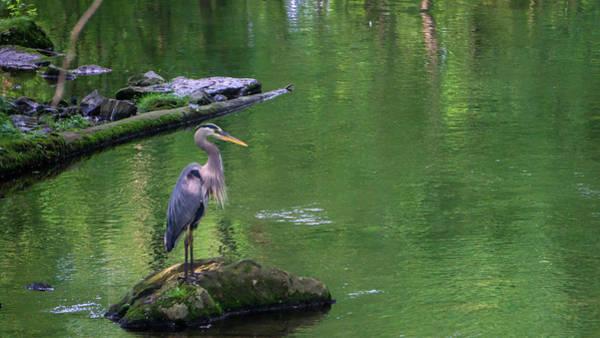 Photograph - Blue Heron by Jason Fink