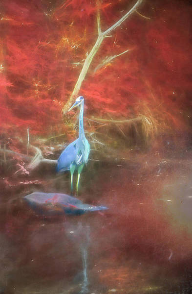 Digital Art - Blue Heron Red Background by Jason Fink