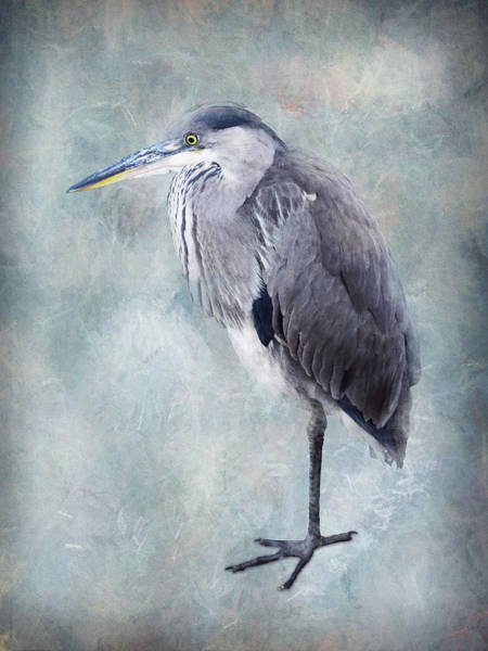 Wall Art - Photograph - Blue Heron Standing by Mihaela Pater