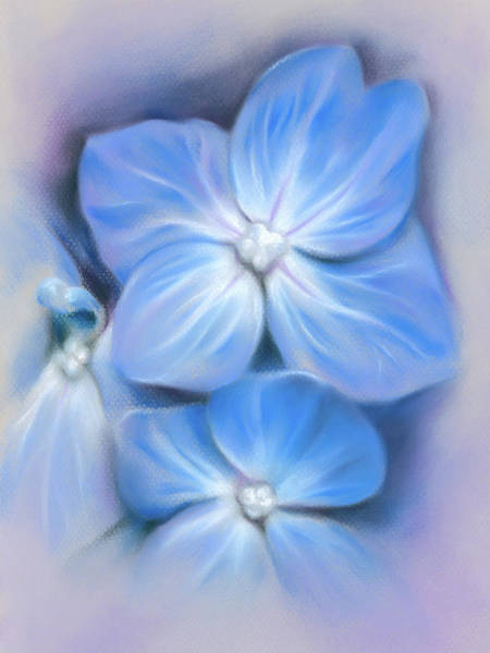Pastel - Blue Hydrangea by MM Anderson