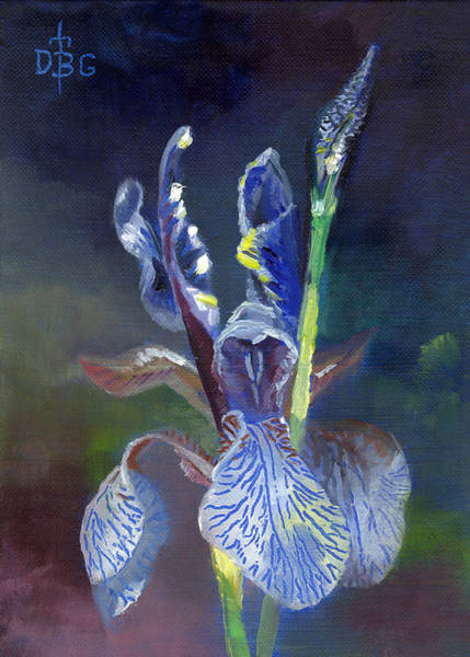 Painting - Blue Iris by David Bader