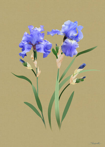 Wall Art - Digital Art - Blue Irises by M Spadecaller