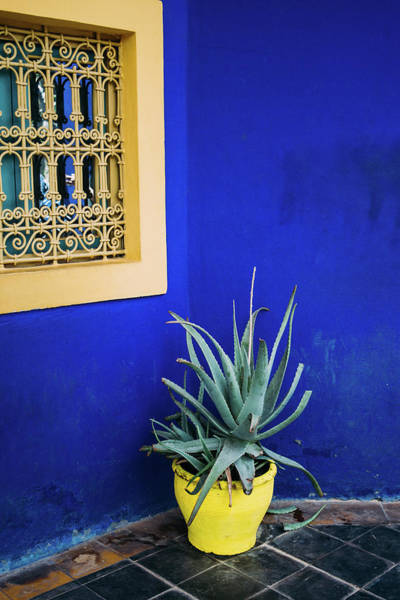 Wall Art - Photograph - Blue Jardin Majorelle by Pati Photography