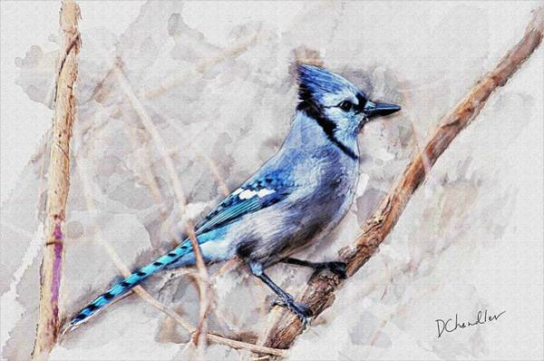 Painting - Blue Jay by Diane Chandler