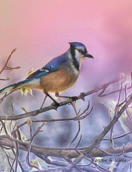 Digital Art - Blue Jay In A Pear Tree by Bonnie Willis