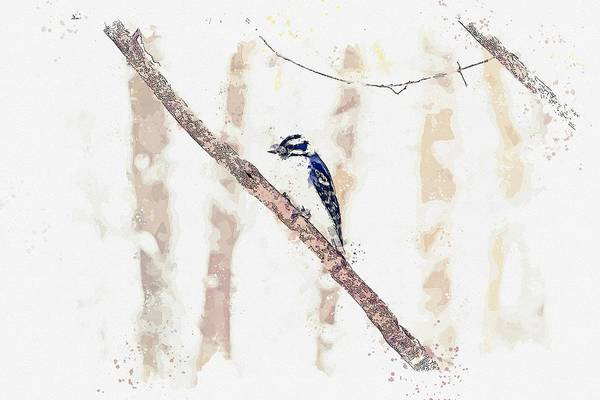 Flycatcher Painting - Blue Jay -  Watercolor By Ahmet Asar by Celestial Images