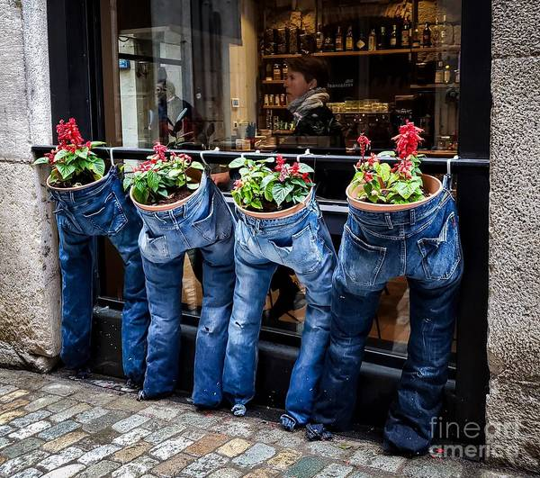 Photograph - Blue Jeans by Mary Capriole