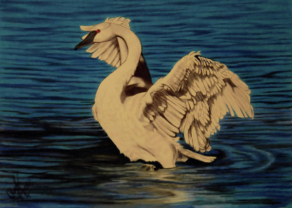White Goose Drawing - Blue Lagoon by Cheryl Poland
