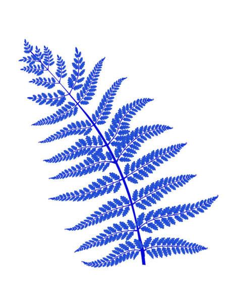 Wall Art - Mixed Media - Blue Leaf Plant by Naxart Studio