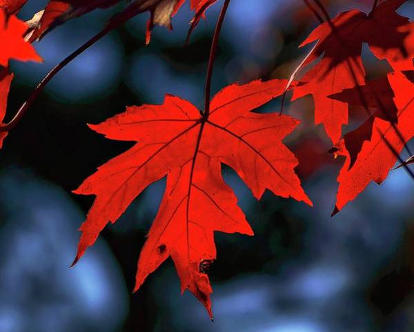 Photograph - Autumn Passion by Susan Callaway
