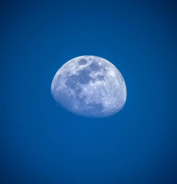 Wall Art - Photograph - Blue Moon by Karen Wiles