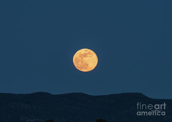 Photograph - Blue Moon by Steven Natanson