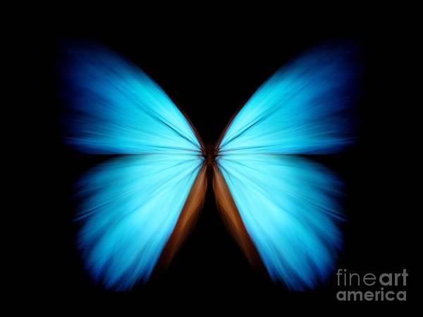 Beautiful Butterfly Photograph - Blue Morpho by Ethylalkohol