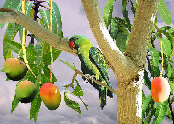 Wall Art - Digital Art - Blue-naped Parrot In Mango Tree by M Spadecaller