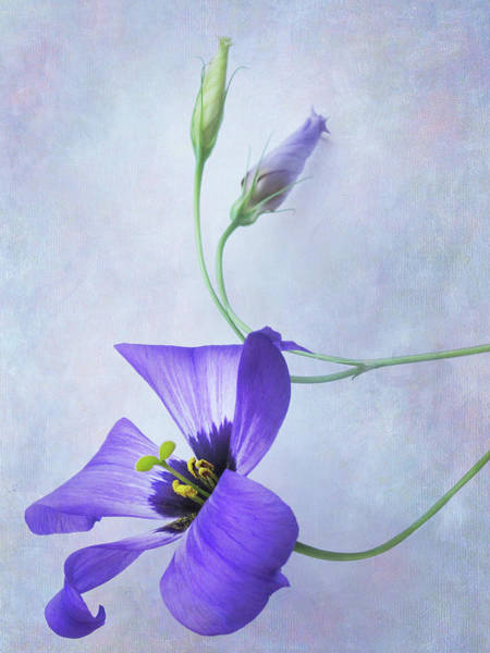Wall Art - Photograph - Blue On Blue by David and Carol Kelly
