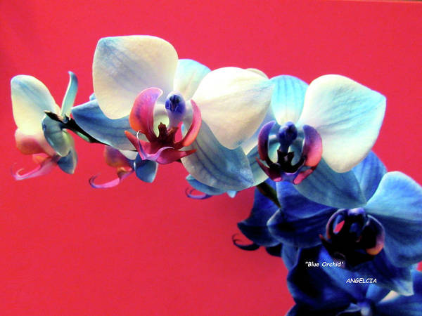 Photograph - Blue Orchid by Angelcia Wright