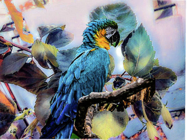 Photograph - Blue Parrot by AE collections