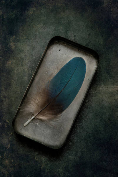 Photograph - Blue Parrot Feather by Jaroslaw Blaminsky