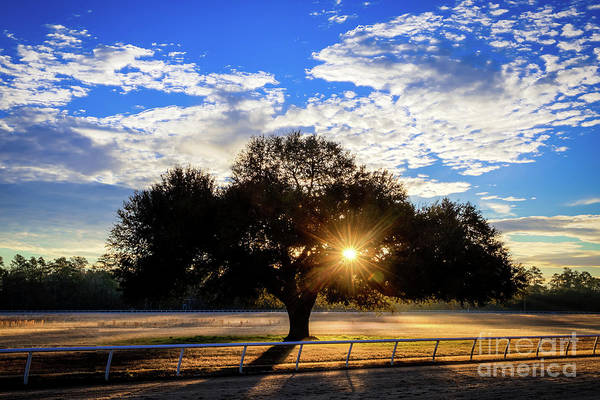 Photograph - Blue Peters Tree Sunrise Aiken Sc by Sanjeev Singhal