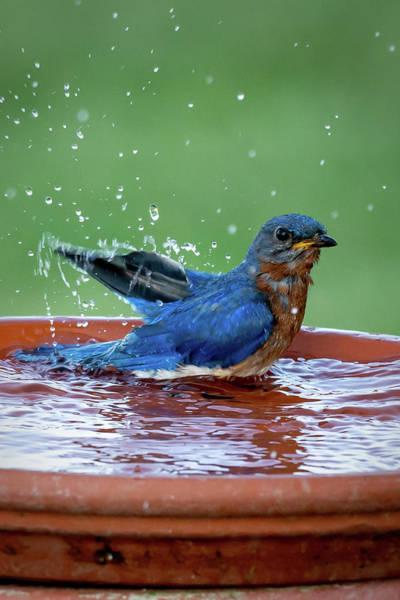 Photograph - Blue Pose by David Heilman