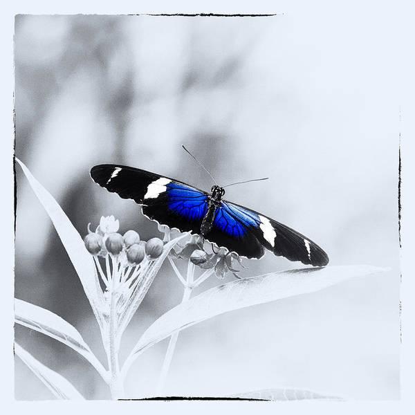 Photograph - Blue Postman Butterfly by Jaroslav Buna