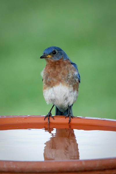 Photograph - Blue Reflection by David Heilman