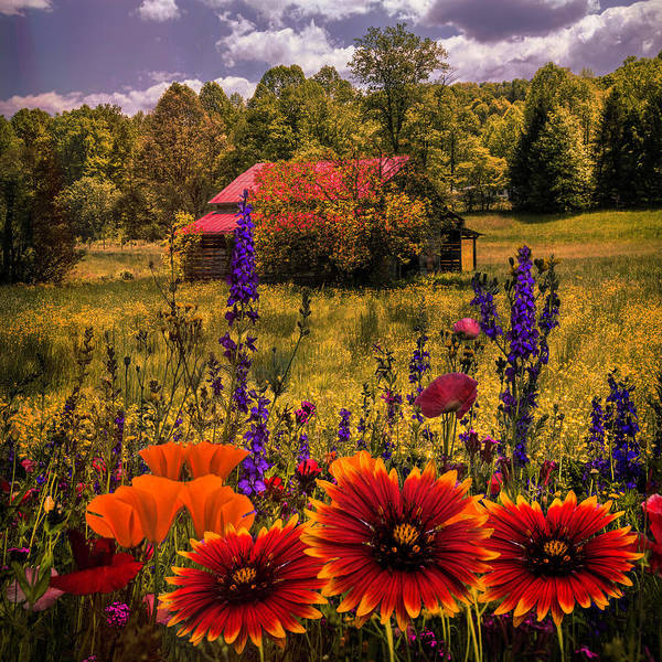 Wall Art - Photograph - Blue Ridge Country Wildflowers On An Autumn Afternoon by Debra and Dave Vanderlaan