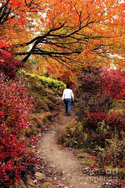 Wall Art - Photograph - Blue Ridge Parkway Autumn Hike by Dan Carmichael
