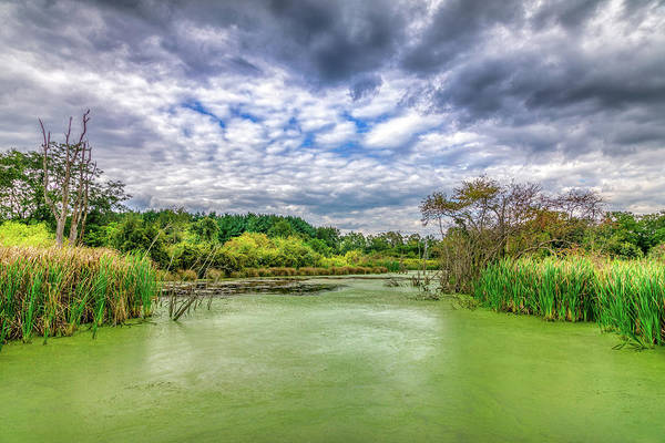Swamp Photograph - Blue Sky And Green Water by Tom Mc Nemar