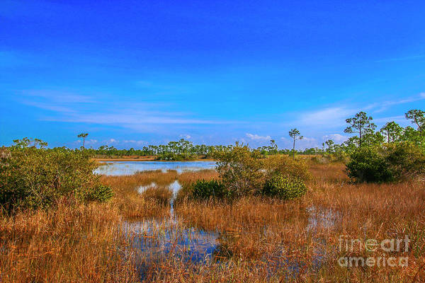 Photograph - Blue Sky And Marsh by Tom Claud