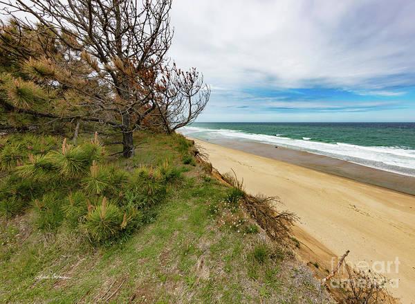 Photograph - Blue Sky Nauset Beach Cape Cod by Michelle Constantine
