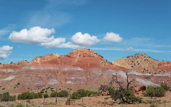 Photograph - Blue Sky Red Rock And Scraggly Juniper by Tom Cochran