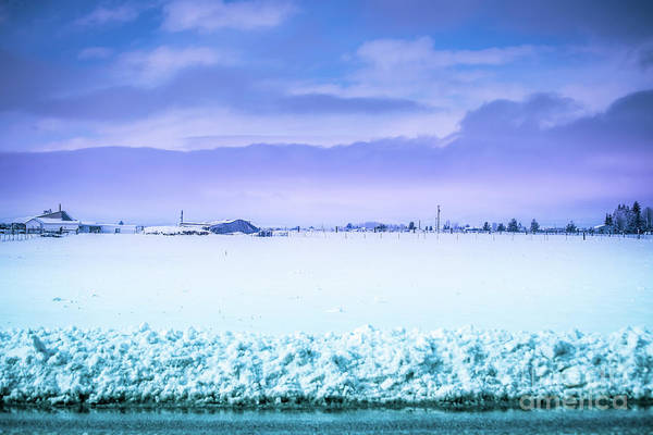Photograph - Blue Sky, White Field by Matthew Nelson