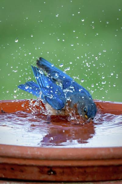 Photograph - Blue Splash by David Heilman