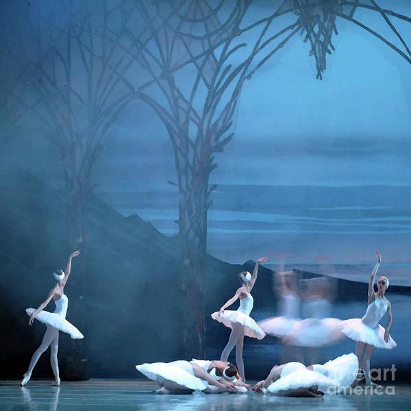 Photograph - Blue Swans by PJ Boylan