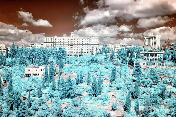 Photograph - Blue Trees In Jerusalem Infrared by John Rizzuto